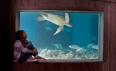 Norwalkers get free admission to the Maritime Aquarium Saturday, Nov. 2
