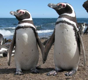 "Two penguins await with interest the Darwin Day talk on ""Darwin's Really Dangerous Idea."""
