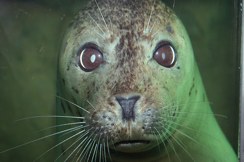 The Maritime Aquarium has won Yankee Magazine's seal of approval as Best Family Attraction is its Best of New England 2016 edition.