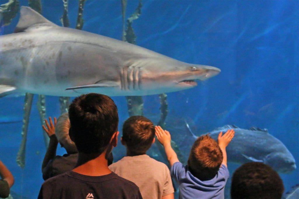 Maritime Aquarium Offers Norwalkers Free Admission